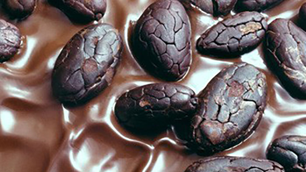 Cocoa beans in chocolate